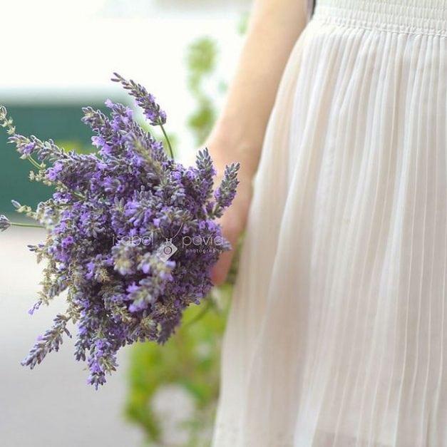 Lavender – My Favorite Oil